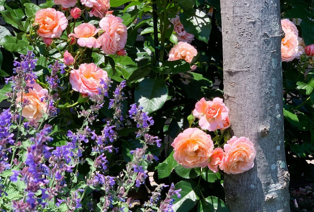 夏の花壇2019